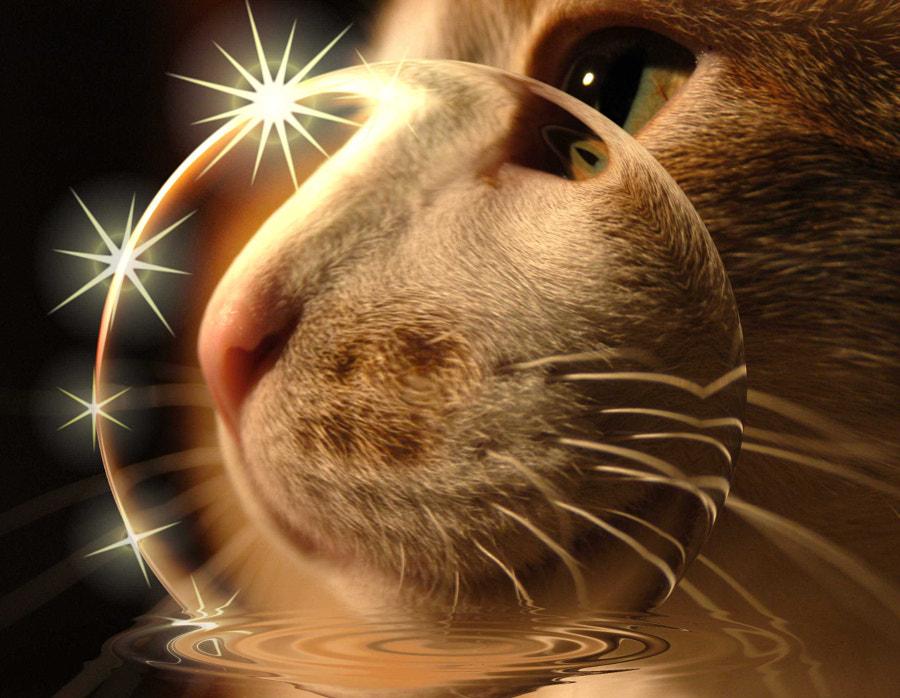 Boo Radley Bubble Stars