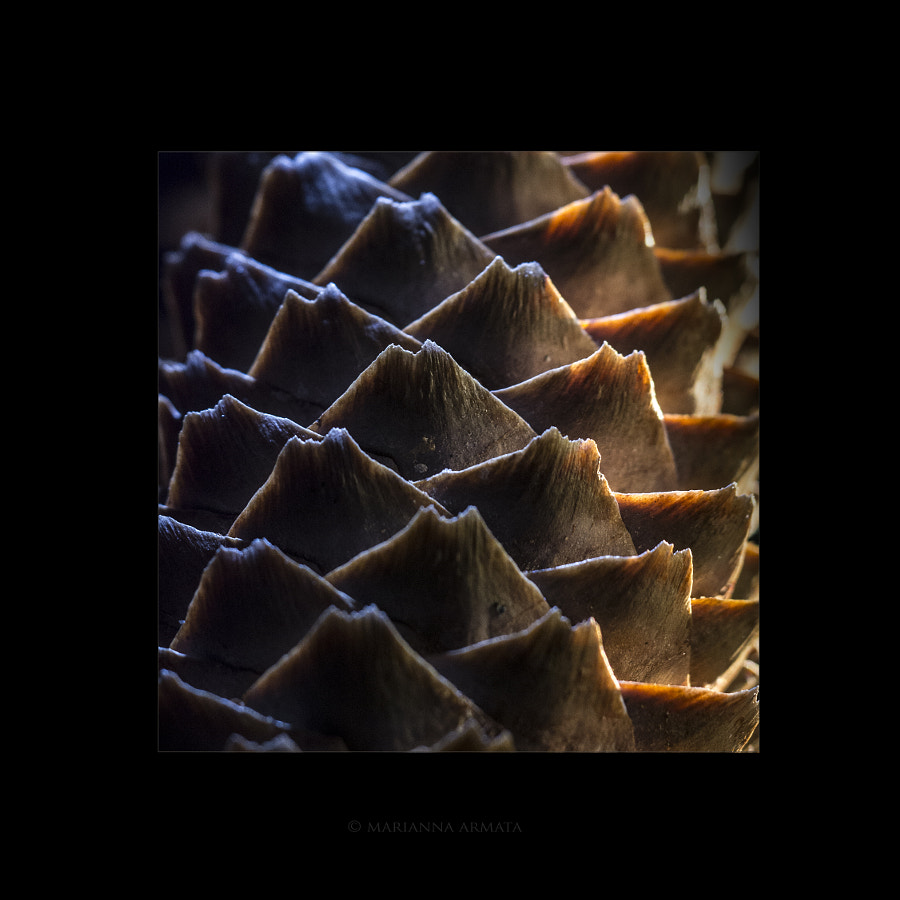 Nature's pattern 2