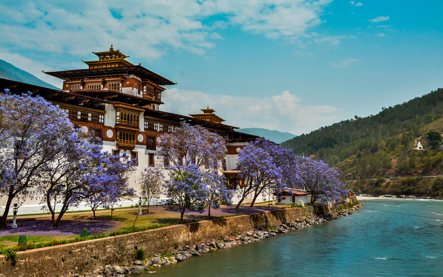 The Punakha Dzong with blooming mauve flowers by Muhib Faisal on 500px.com