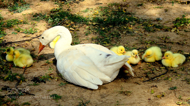 Photograph Family rest time.. by Samrat  Mukhopadhyay on 500px