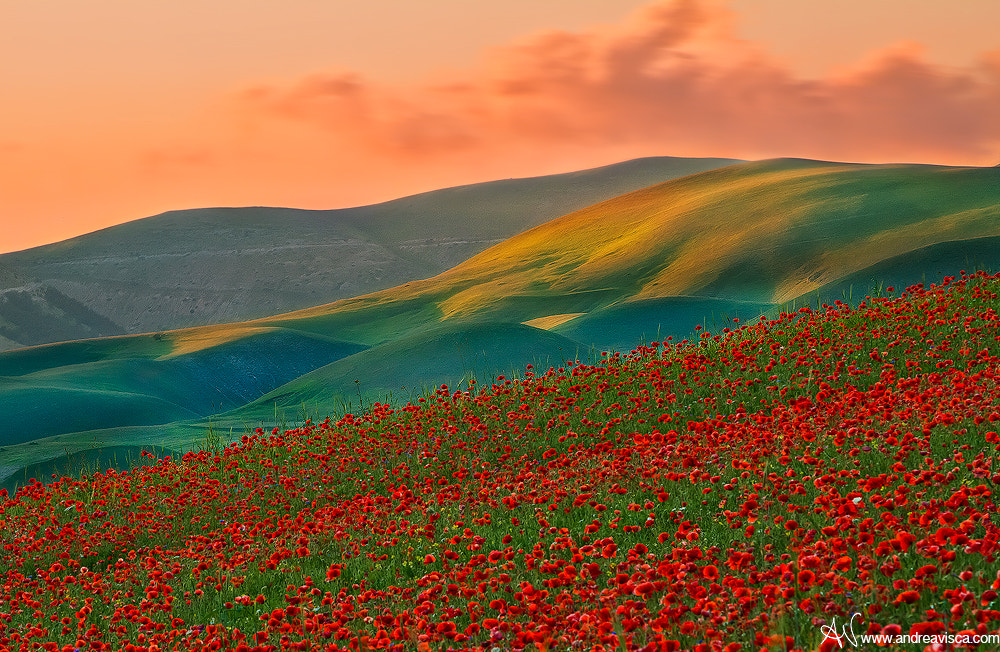 Photograph Colors by Andrea Visca on 500px