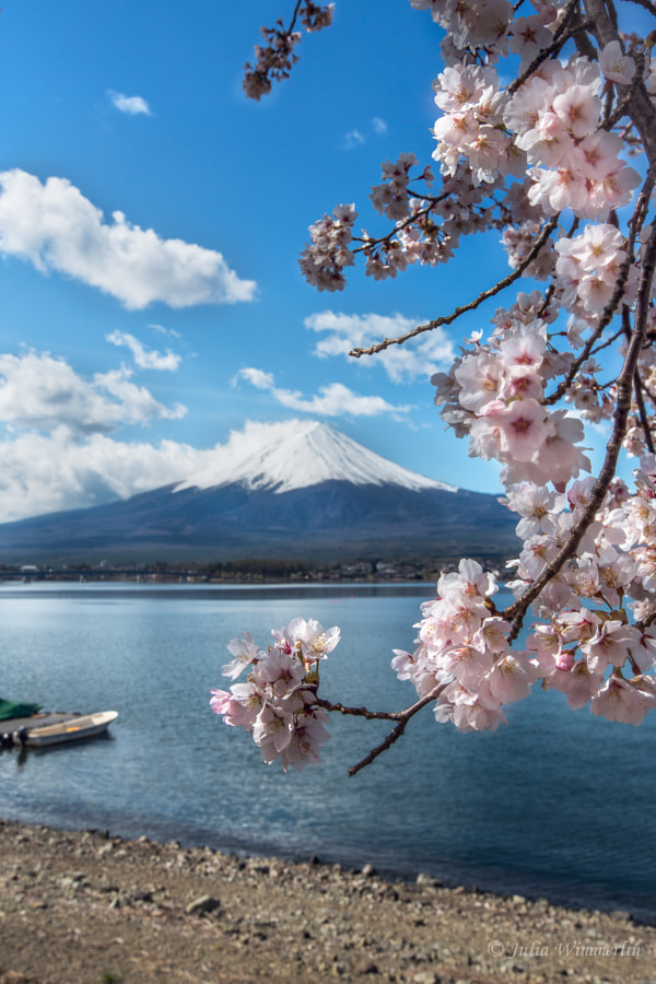 Classic view of Mt.Fuji by Julia Wimmerlin on 500px.com