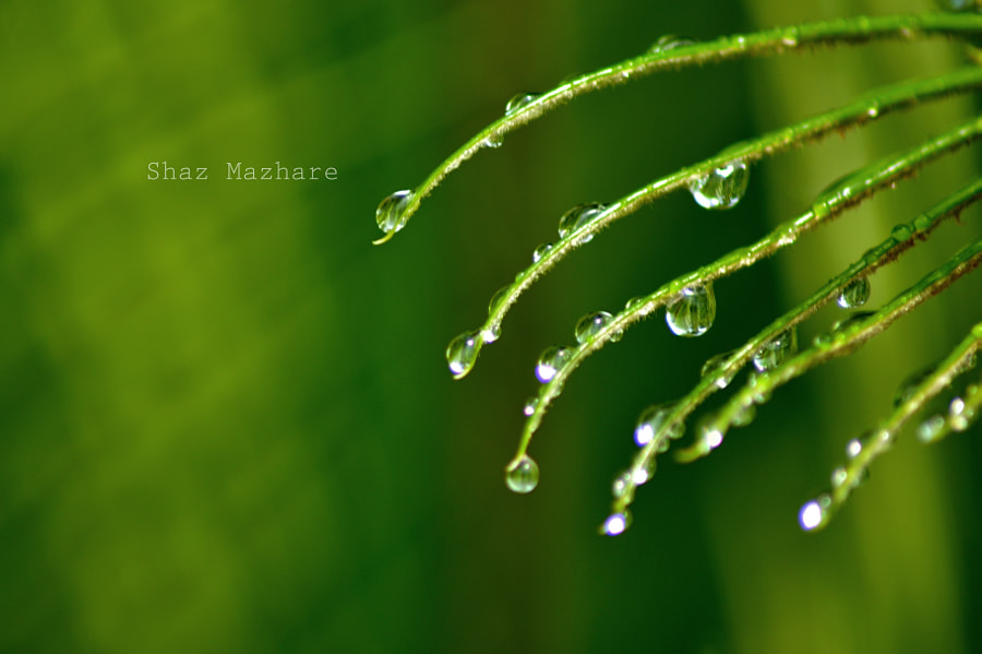 Photograph Feel the Green! by Shaz Mazhare on 500px