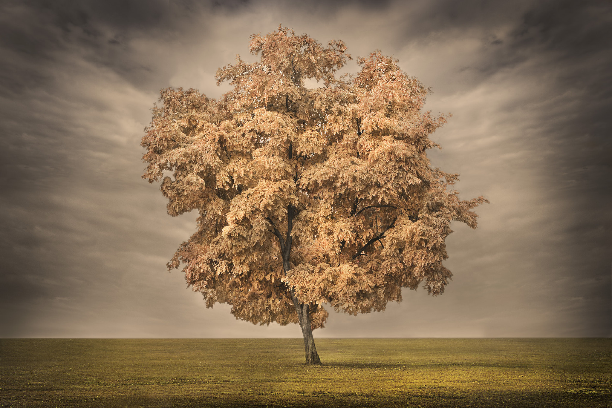 Photograph tree of fortune by Rio  Arianto on 500px