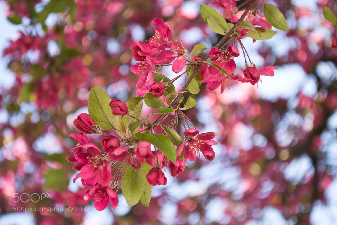 Photograph Fleurs de Printemps 2 by Charles DELEPINE on 500px