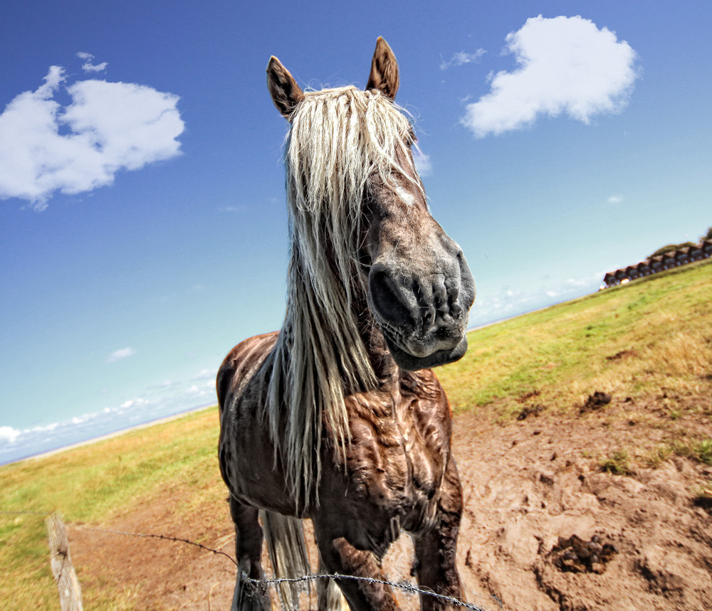Photograph Alter Zosse | old horse by Björn Bobsien on 500px