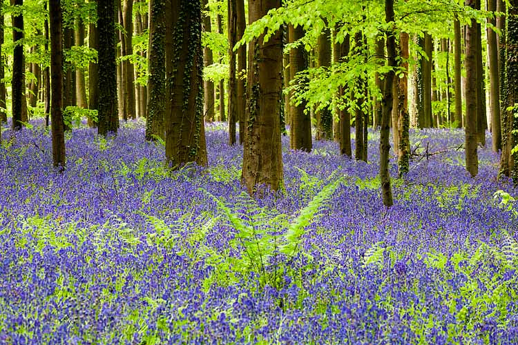 Photograph Hallerbos by Hillebrand Breuker on 500px