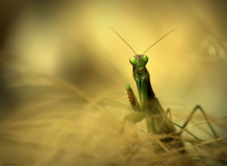 Photograph Terror in the bokeh by Stephane PERIN on 500px