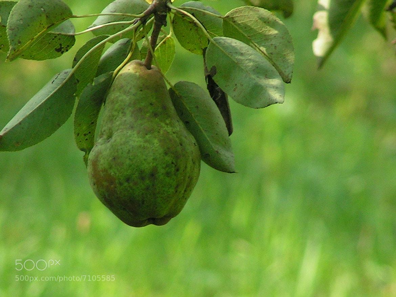 Photograph pear by Gabriela  Krasová on 500px