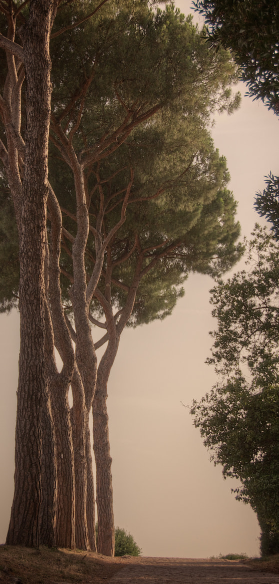 Photograph Row of trees on The Palatine Hill, Rome, Italy by Tristan Brittaine on 500px