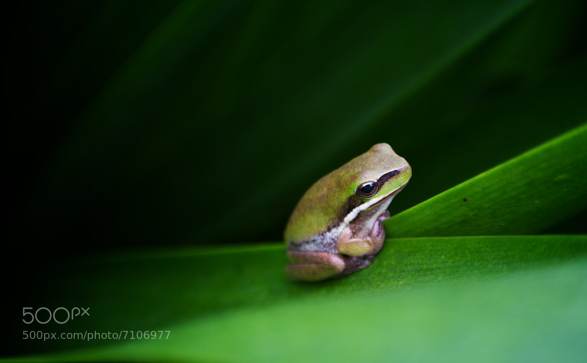 Photograph Tiny Frog by Tristan Brittaine on 500px