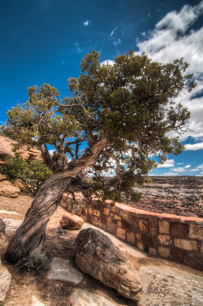 Photograph The Twisted Tree by Jason Hines on 500px