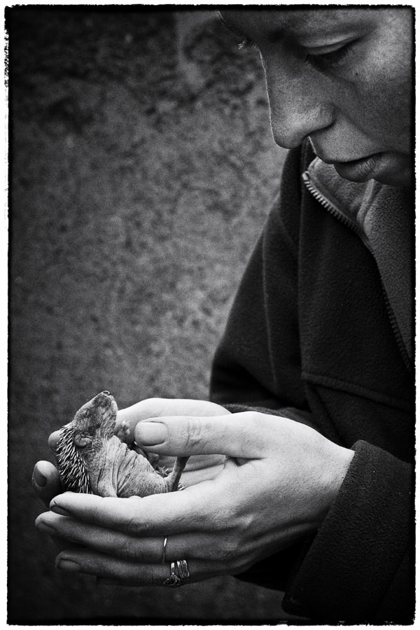 Photograph Little hedgehog in her hands by Stanislav Šebek on 500px