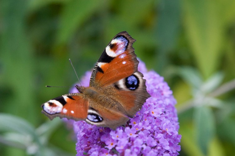 Photograph Butterfly by Naomi Turner on 500px