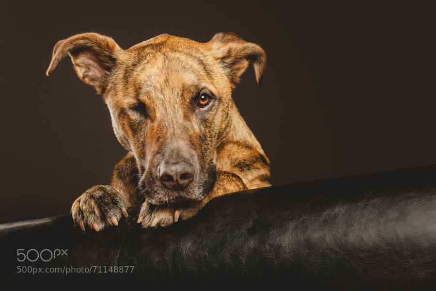 Photograph Grumpy, one-eyed Joe by Elke Vogelsang on 500px