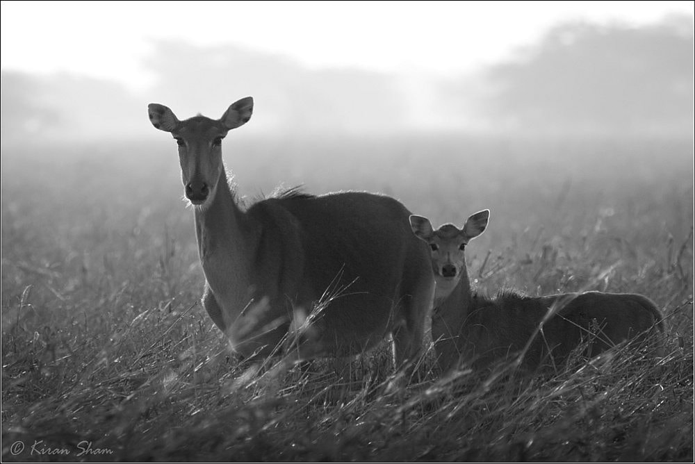 Photograph Mom and baby by Kiran Sham on 500px