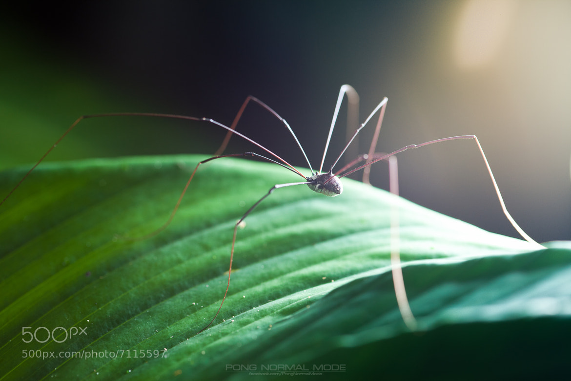 Photograph 8leg by chakrapong taveepongsak on 500px