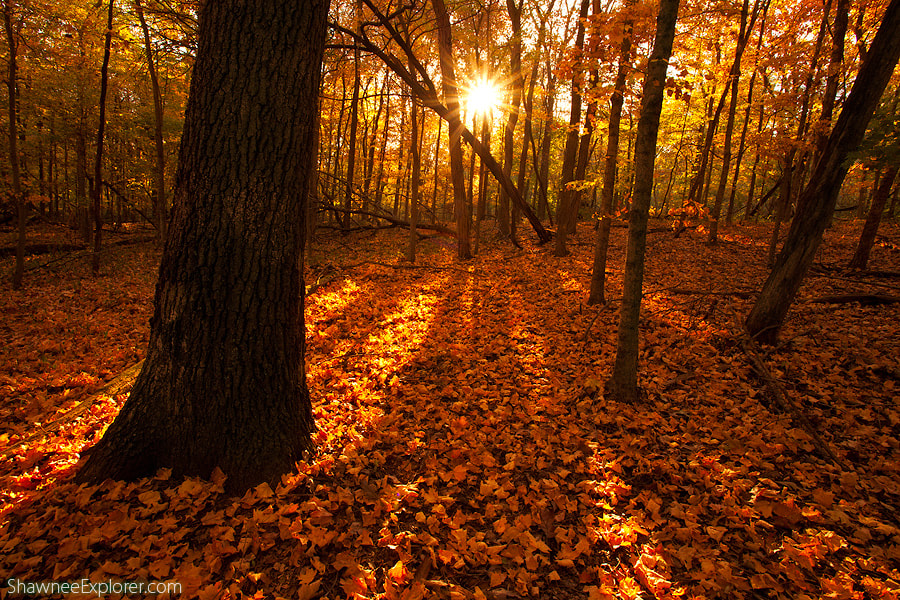 Photograph Autumn Burst by Taylor Reed on 500px