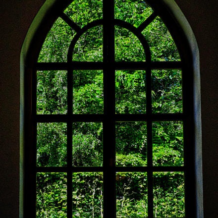 Window to a greener world