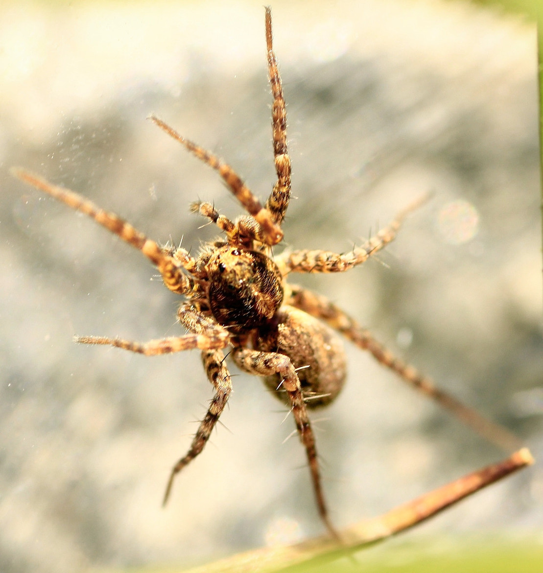 Photograph Spider by Philipp G on 500px