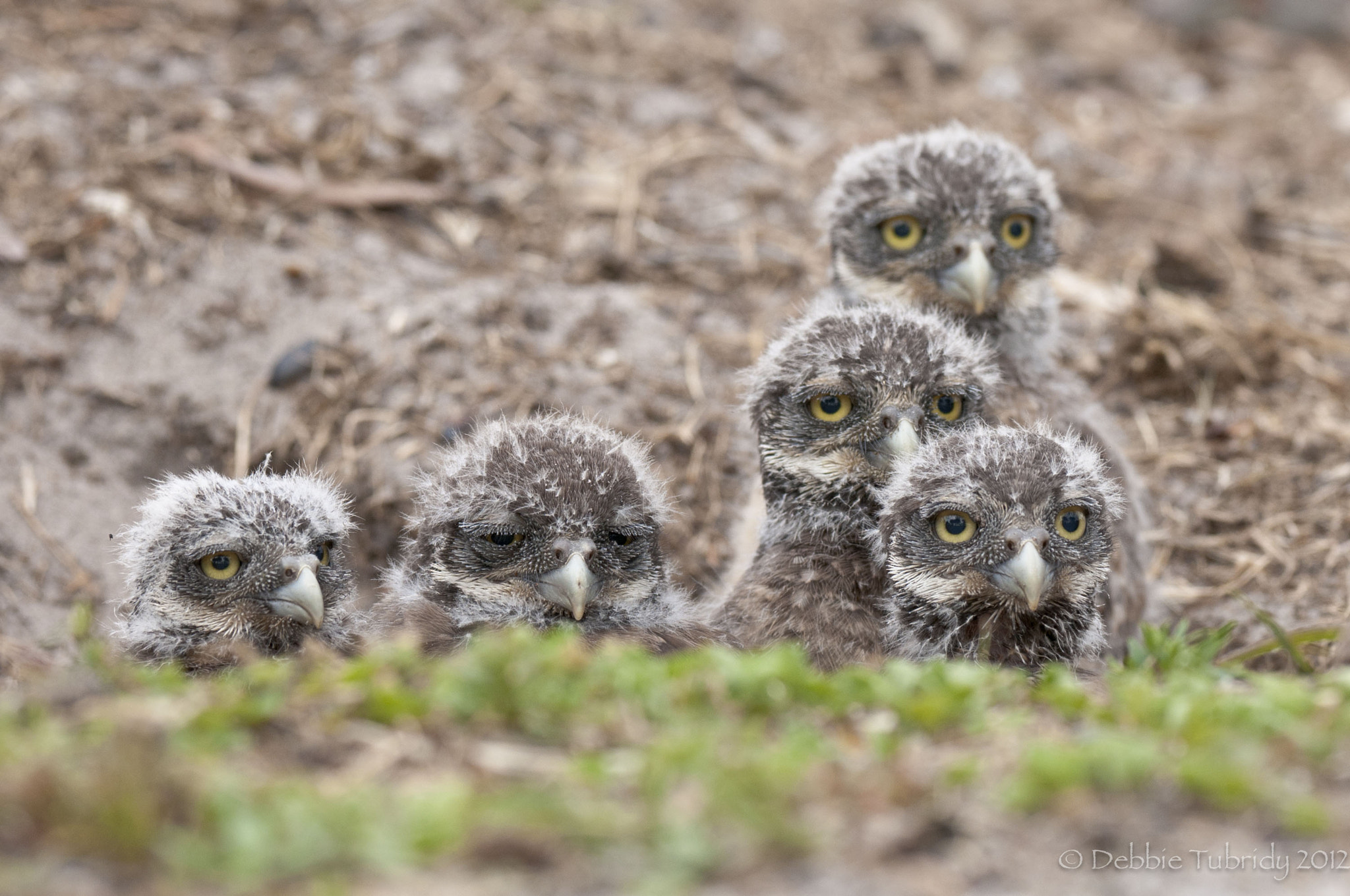 Photograph See, I Told You We Had Visitors by Debbie Tubridy on 500px