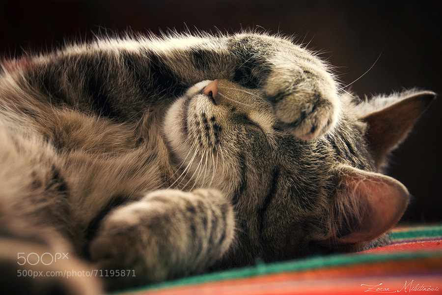 Photograph Do Not Disturb! by Zoran Milutinovic on 500px