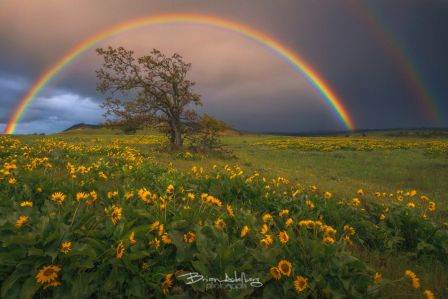 Wildflower Prism. by Brian Adelberg on 500px.com
