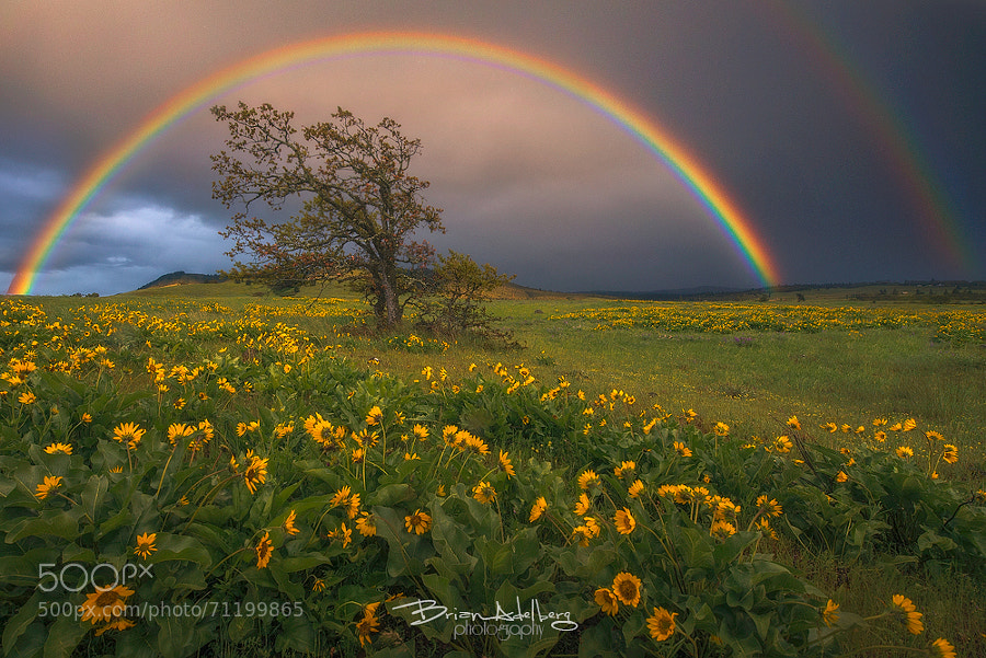 Photograph Wildflower Prism. by Brian Adelberg on 500px