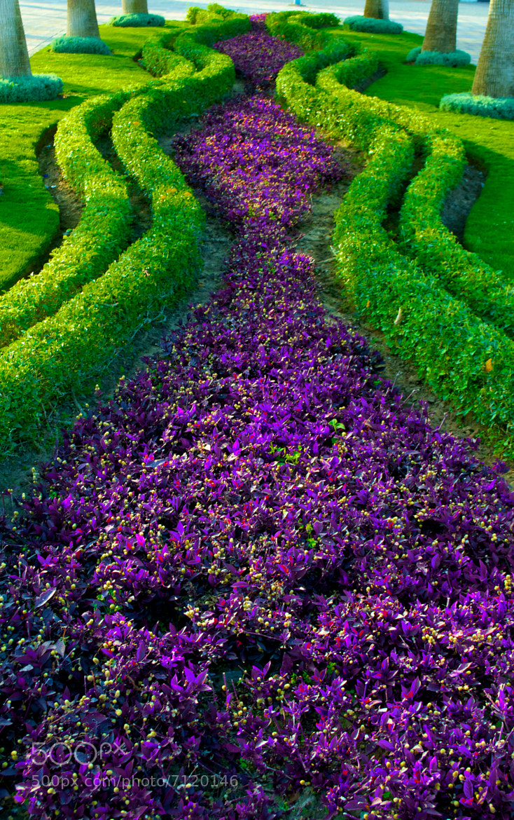 Photograph River of Flower ! by jamil ghanayem on 500px
