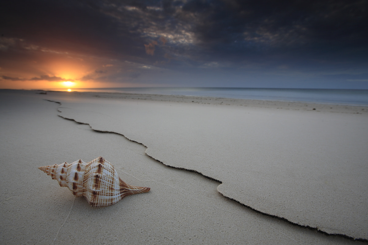 Photograph The Shell by Garry Schlatter on 500px