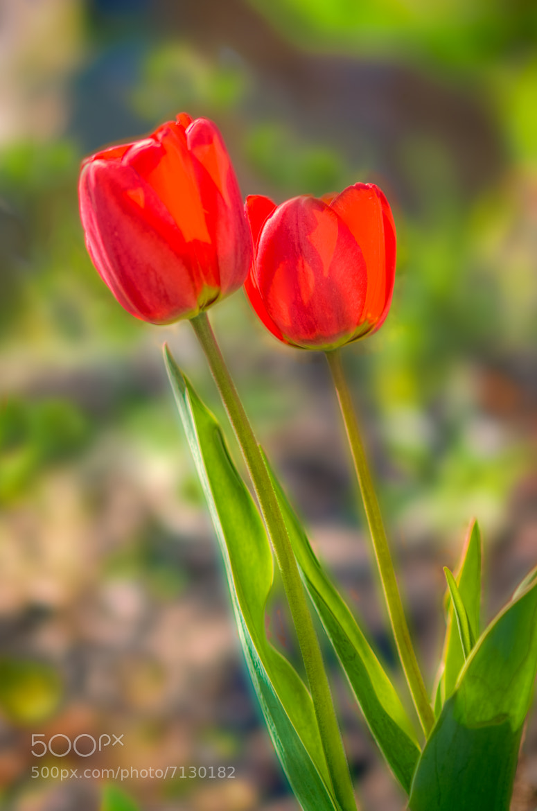 Photograph Soft Spring by Philip Rice on 500px