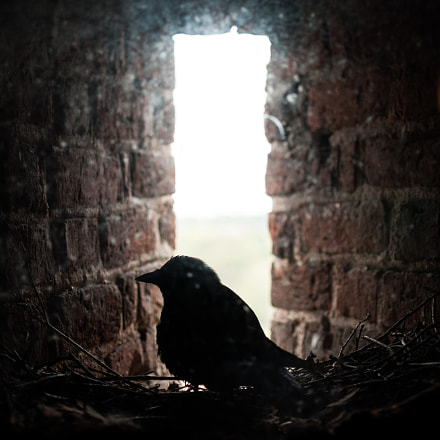 Birds of Brodnica Tower 2