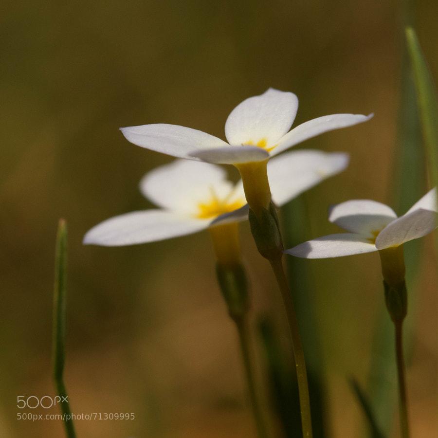Soft closeup of a favorite wildflower