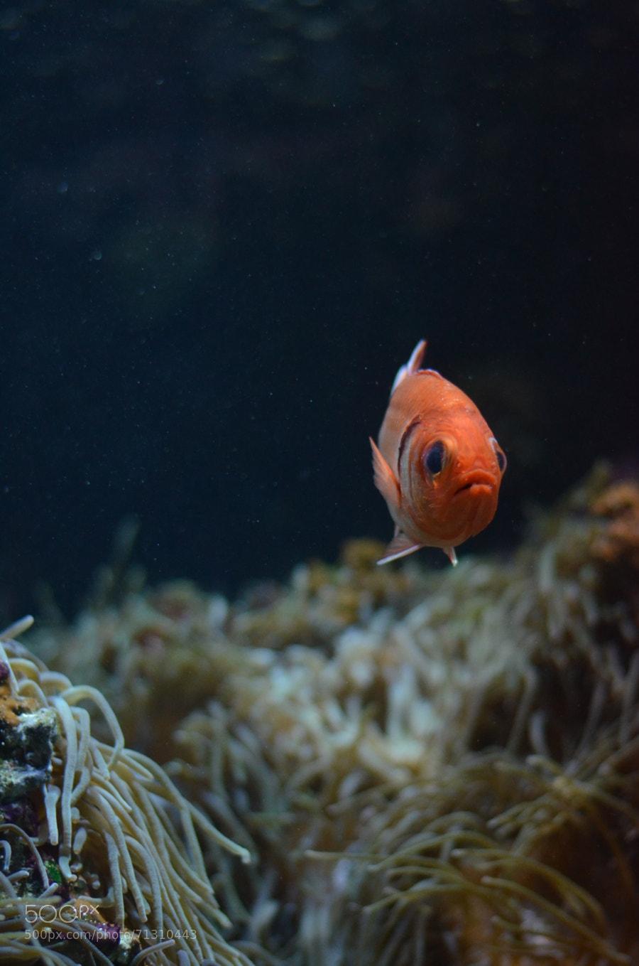 Fish by sara martignoni