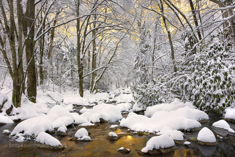 Photograph Winter Gold by Scott Hotaling on 500px
