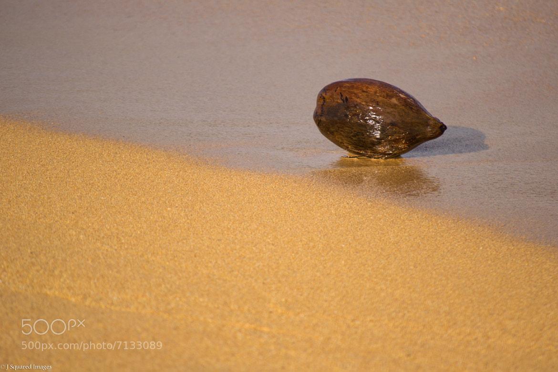 Photograph Coconut Zen by Jason Johnson on 500px