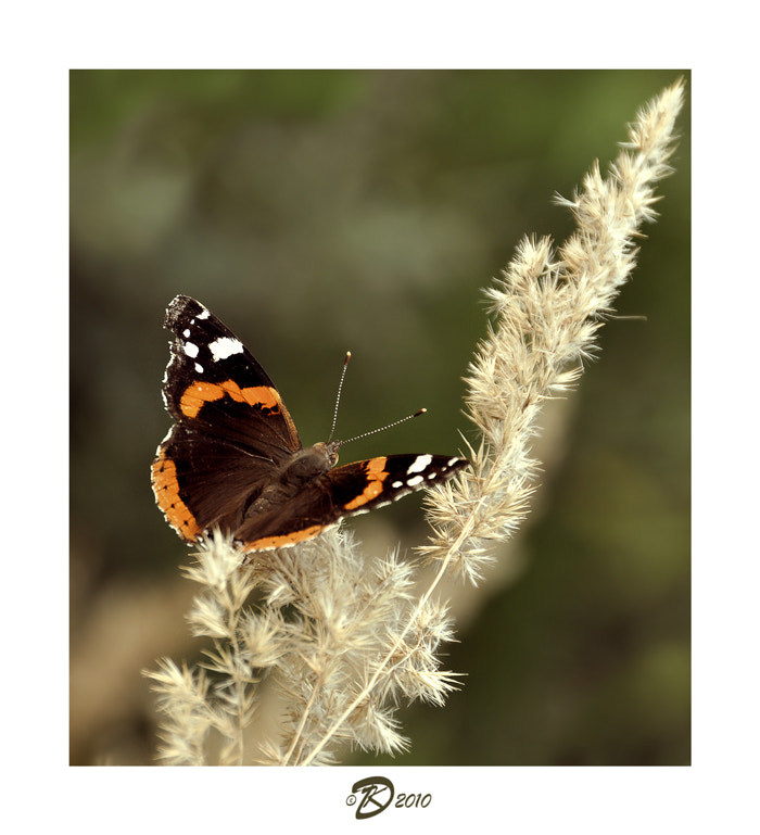 Photograph Butterflies album: 5 by no_gravity * on 500px
