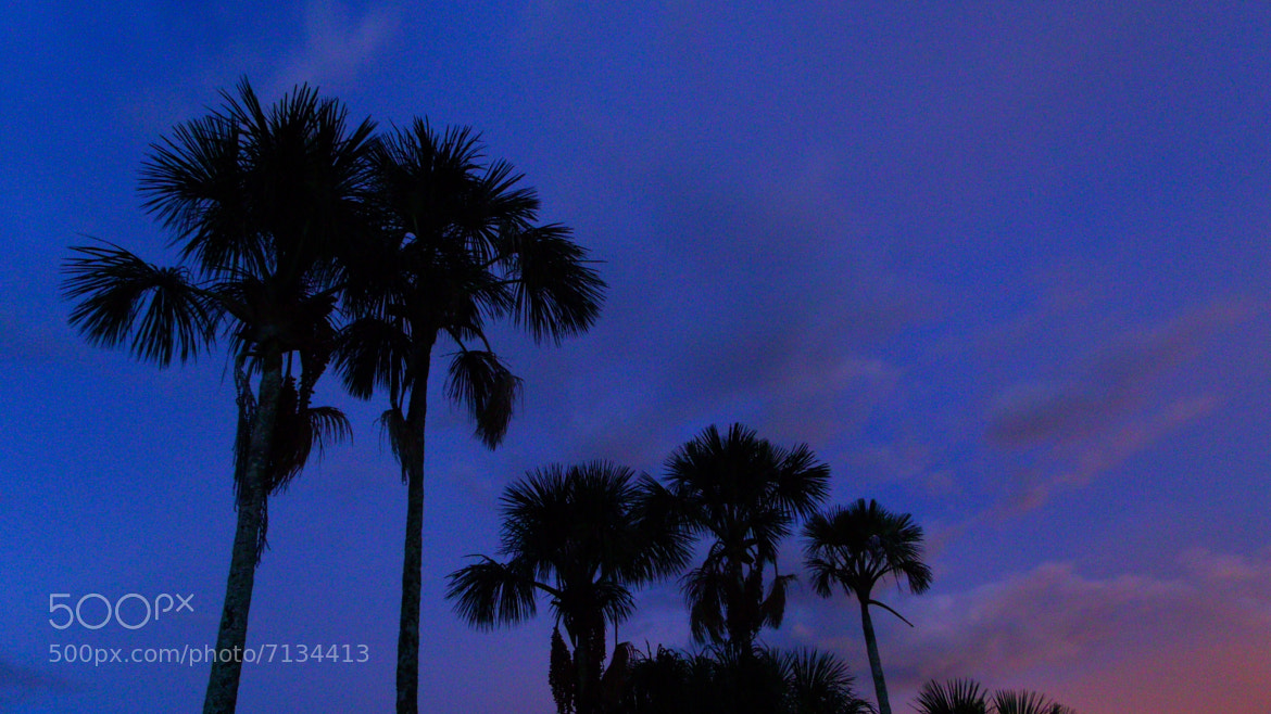 Photograph palm trees by Marcelo Molina on 500px