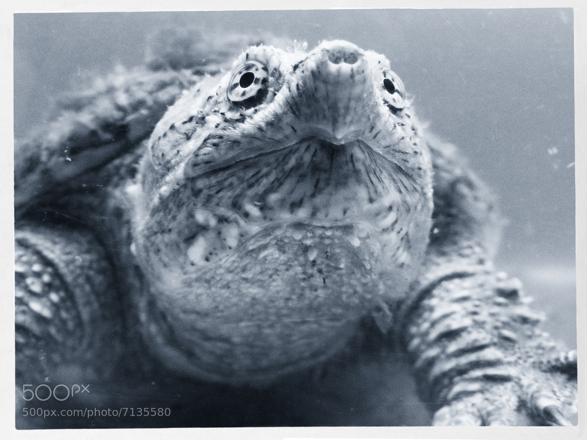 Photograph Turtle by Guillermo García on 500px