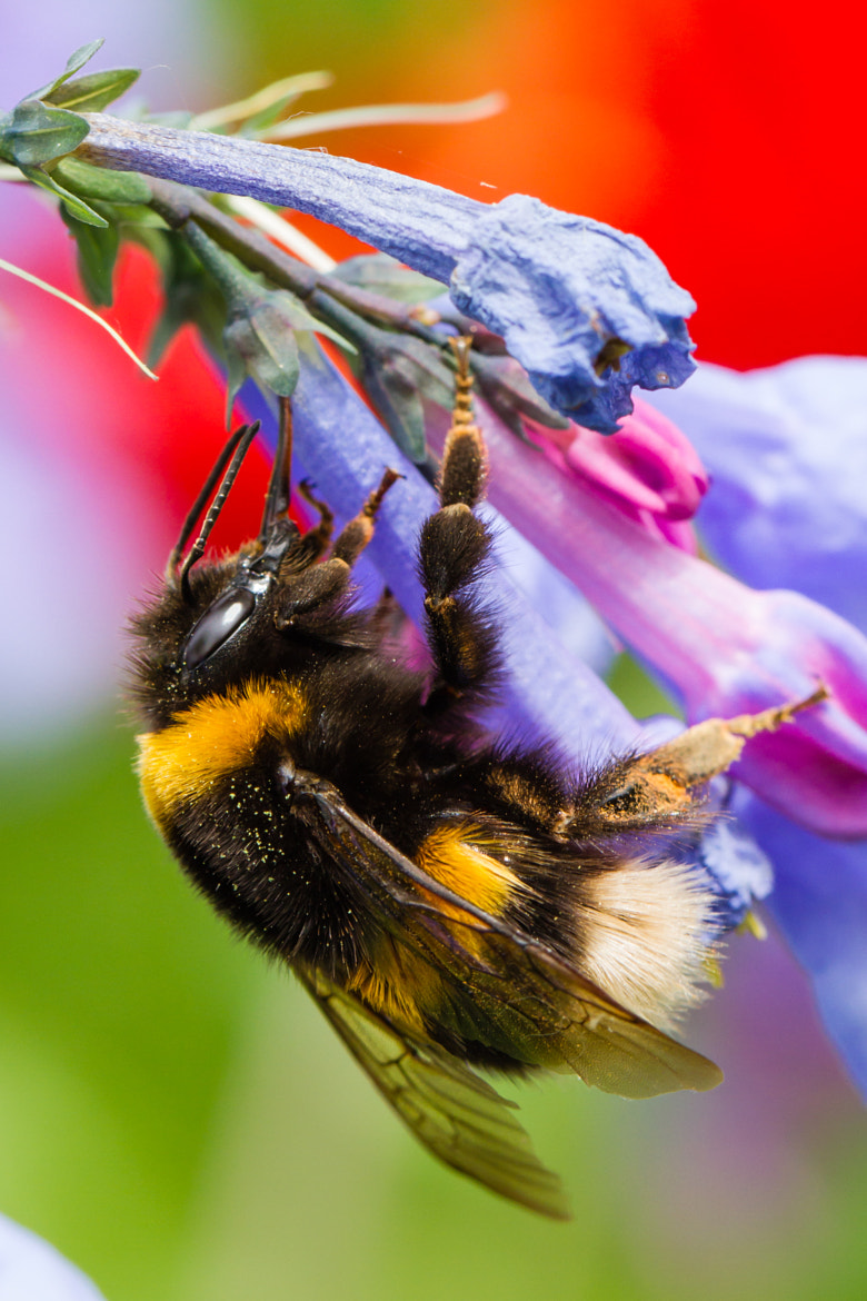 Photograph Bee by Markus _ on 500px