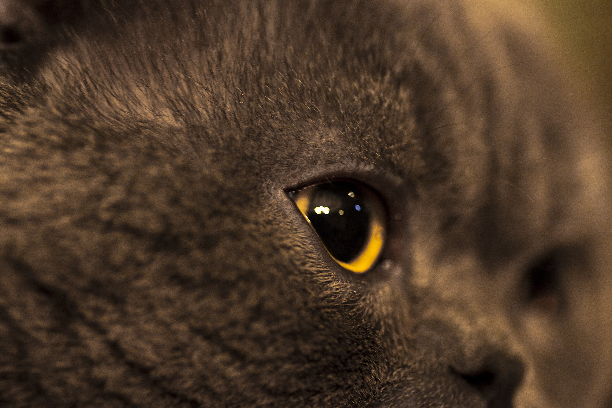 Photograph Cat's Eye...!  by Emad Nematollahi on 500px