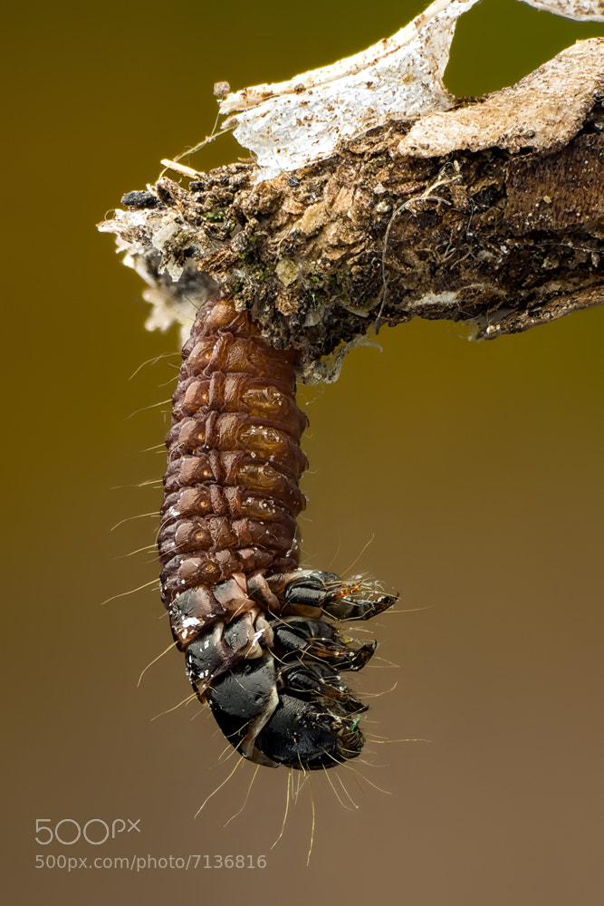 Photograph Larva by Markus Reugels on 500px