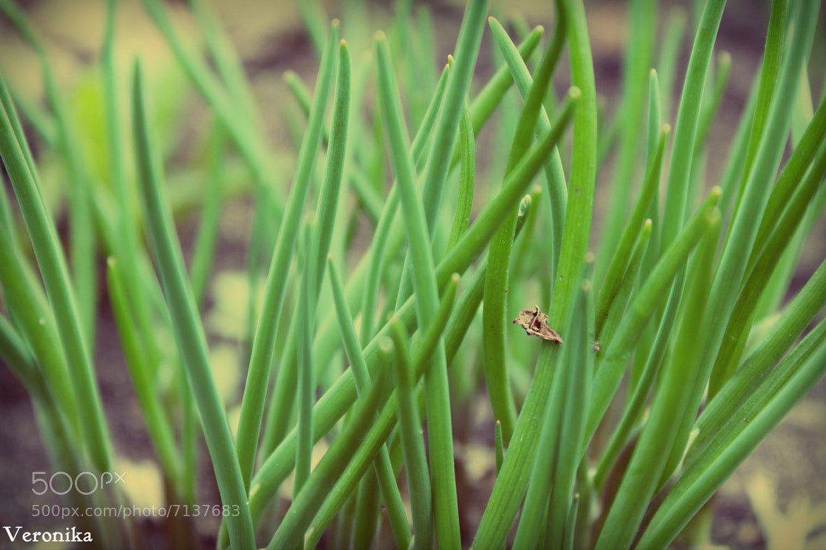 Photograph Untitled by nika31 on 500px