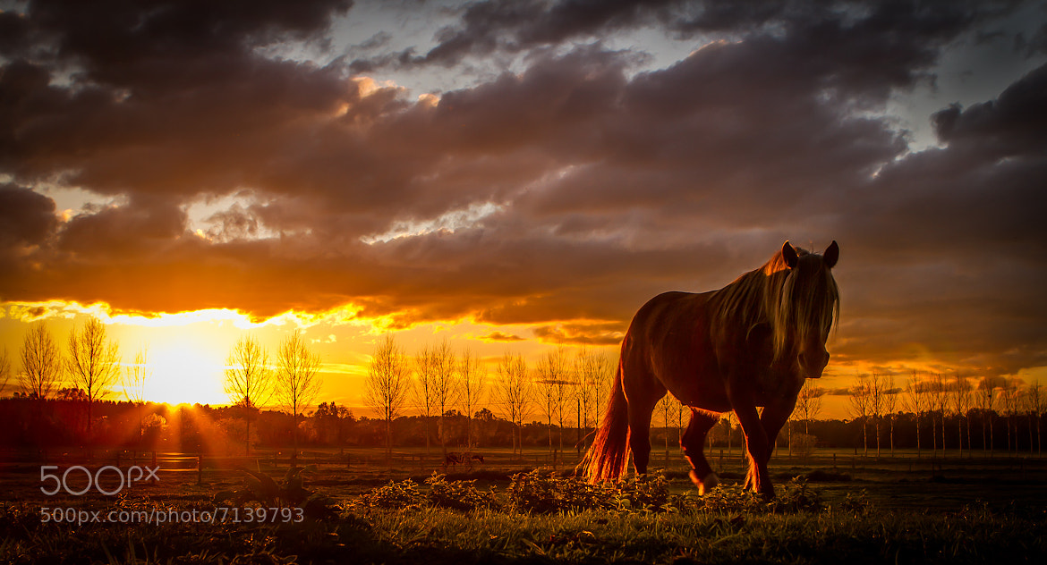 Photograph The war horse by Ramelli Serge on 500px