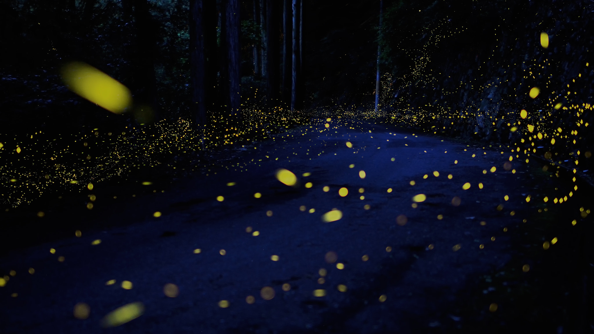 Photograph Firefly Road by Tsuneaki Hiramatsu on 500px