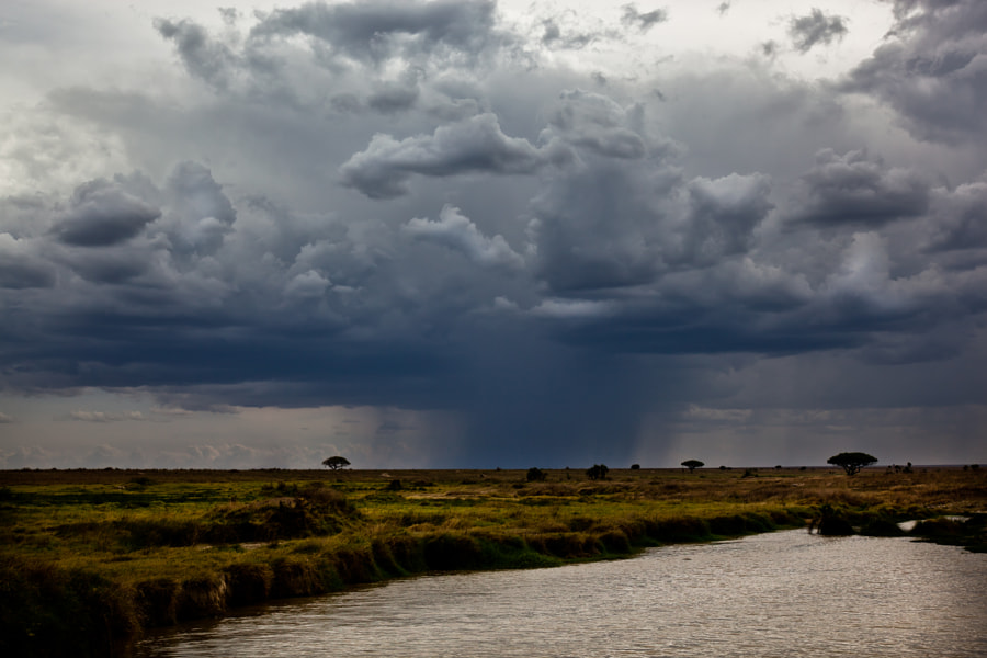Rain over Serengeti