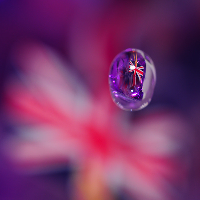 Photograph Goutte anglaise by Noun 2B on 500px