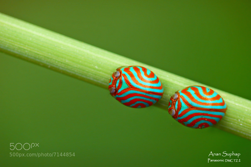 Photograph Twins(ลายบ้านเชียง) by Anan Suphap on 500px