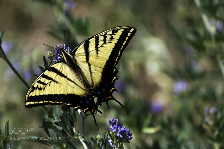 Photograph Butterfly by Alfredo Garciaferro Macchia on 500px