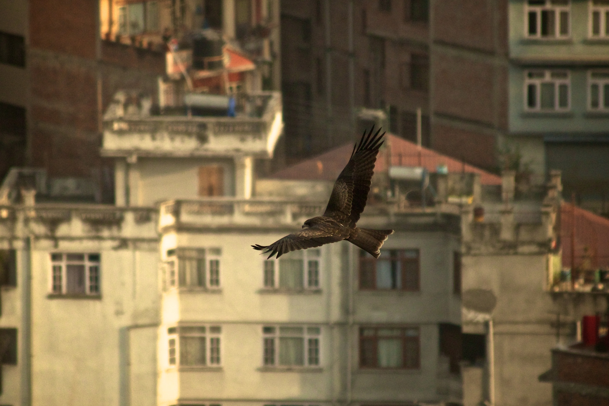 Photograph Black Nepalese Kite by Jethro Stamps on 500px